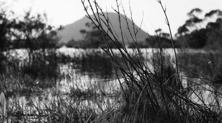 wet_land Public Programmes teaser image